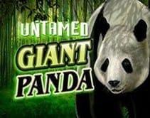 Untaiment Giant Panda